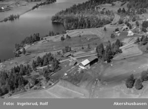 Holtopp under Vik Gård 20 07 1954